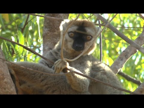 Madagascar - Treasure Chest of Evolution