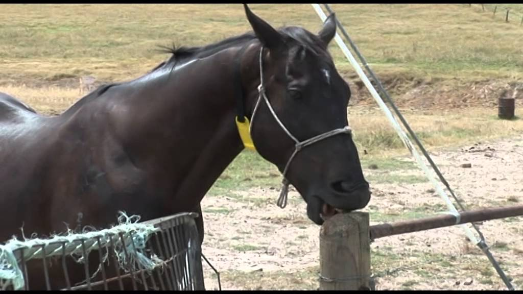 HORSE CRIB-BITER CRIBING COLLAR WINDSUCKING STRAP VICES