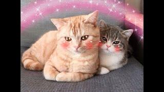 Смешные котики под приятную музыку
