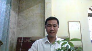KIEN VLOGS CHANNEL  TRỒNG CÂY KIM NGÂN LƯỢNG TRONG CỐC