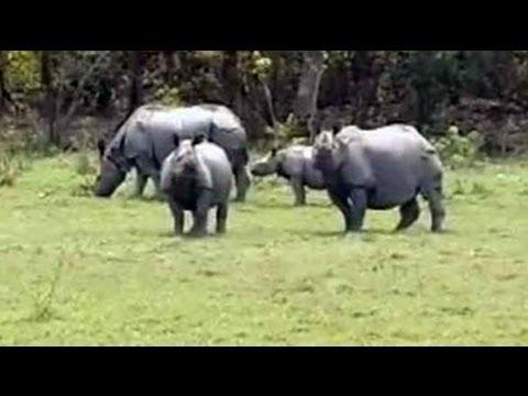 In Kaziranga, worry over increasing rhino poaching