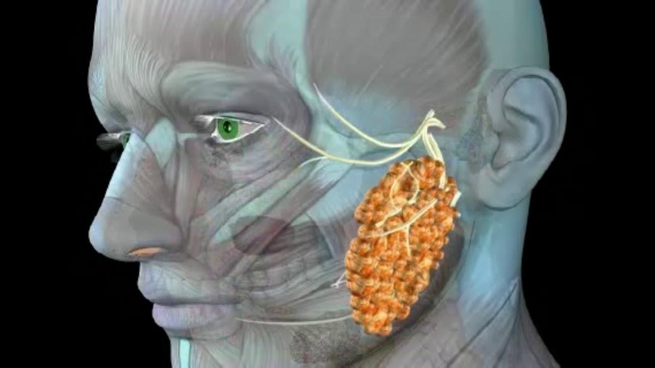Pe pleoape papilom. Papilomul pe pleoapa inferioară: cauze și metode de tratament - Sarcom June