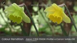 C100 - Comparing Art Adams Alexa Profile with Default Canon Profiles