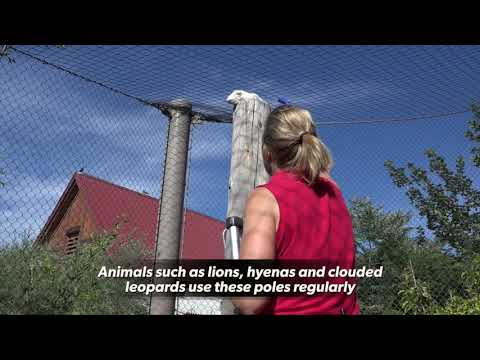 Denver Zoo's carcass feeding program provides nutrition and enrichment