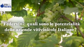 Federvini: quali sono le potenzialità delle aziende vitivinicole Italiane?