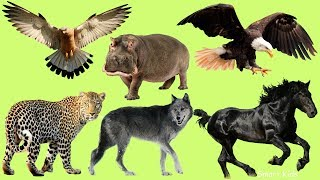 Животные для детей | Учим диких животных | Учим голоса и названия животных для самых маленьких