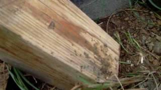 薬剤塗布した木片を土の上に15ヶ月間放置したらどうなったか