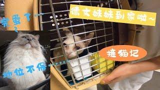 【接猫记】德文卷毛妹妹终于到家啦跟布偶猫哥哥辛巴的第一次会晤