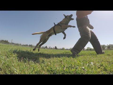 GoPro: Becks the Bomb Rescue Dog – A True Hero