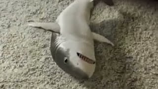 Shark toy - is that toy fish real