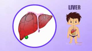 Liver - Human Body Parts In Tamil - Pre School - Animated Videos For Kids