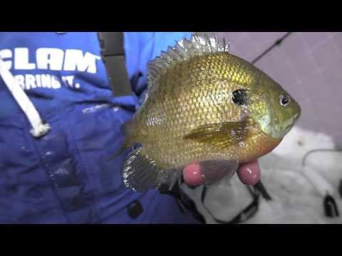 Chasing Panfish in Otter Tail Lakes Country