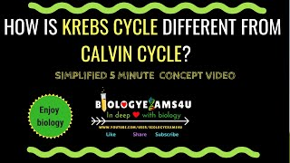 Difference between Krebs cycle and Calvin cycle (Krebs Cycle vs Calvin cycle)