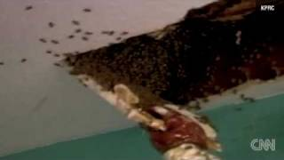 !!BEES TURNED HOUSE INTO HIVE FOR 10YRS!!
