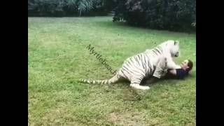 White Tiger Says Hello | Myrtle Beach Safari