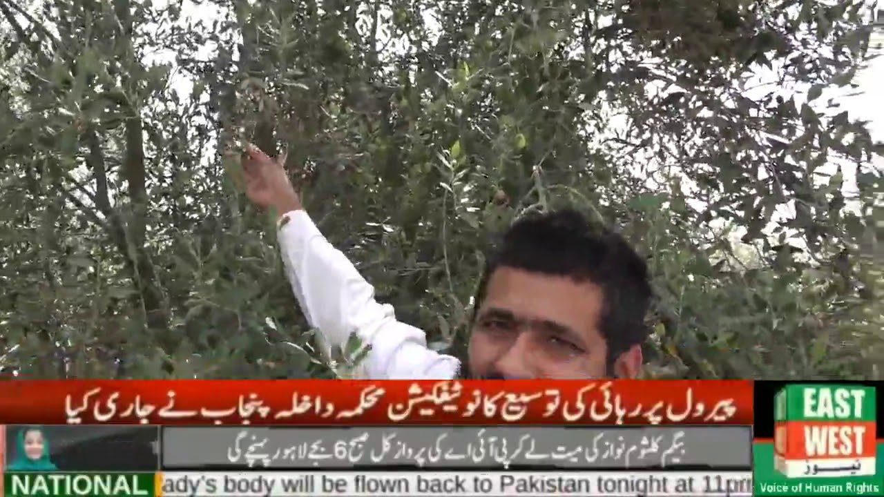 An interview with Dr  Ramzan Barani Institute Chakwal for Olive Cultivation  in Potohar Town