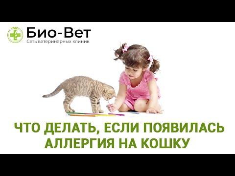 Вопрос: Что делать, если на котов аллергия, а так хочется завести пушистика?