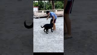Rocky Ko Train Karna Hai Bada Muskil 😉😂 | Rocky The Labrador