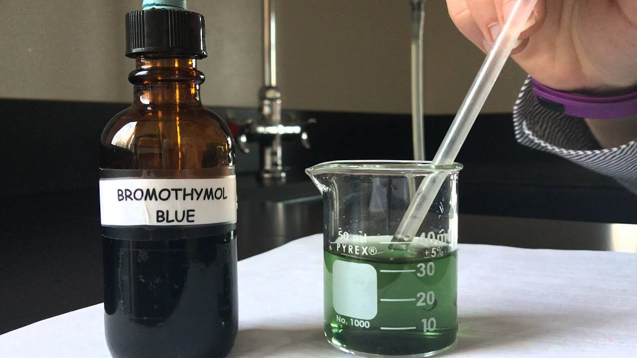elodea and bromothymol blue lab results