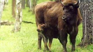 Урок 45  Природознавство 1 клас. Які дикі тварини живуть у твоєму краї?