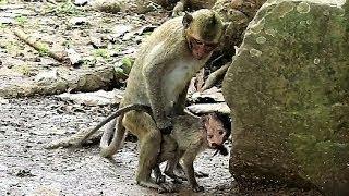 Padre Mono En Franca Violación De Hijo... Oh!!