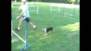 Hua Dog Agility Training