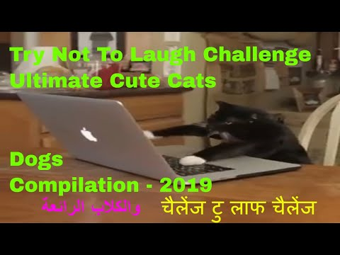 Try Not To Laugh Challenge - Ultimate Cute Cats & Dogs Compilation - 2019