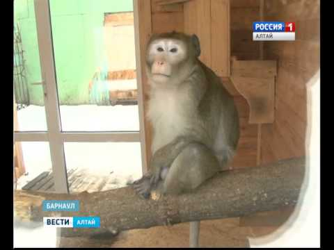 3 января в барнаульском зоопарке сыграют свадьбу обезьян