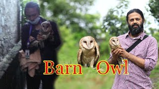 Rescue of injured Barn Owl ft- Raju Acharya | Rambazar | Pokhara | Rohit Giri |
