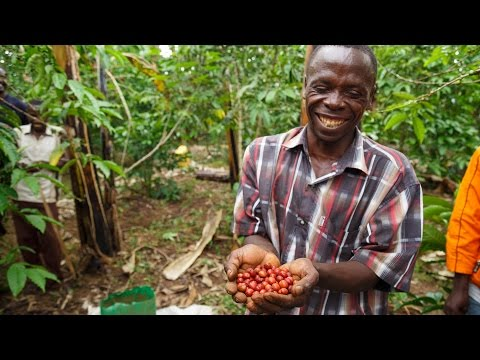 Brewing Prosperity in Uganda: Coffee Farmers Turn to Climate-Smart Agriculture