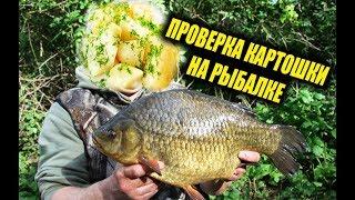 КАРАСЬ НА ОТВАРНОЙ КАРТОФЕЛЬ Проверка на рыбалке реакция рыбы на картошку подводная съемка карася
