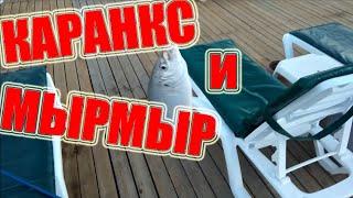 Рыбалка в Турции Каранкс лат Caranx Сиган Мырмыр морская рыба Аланья Как ловить в море