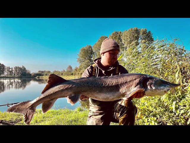 Ihmsen - Der Forellengott Forellensee Rosenweiher Beste Leben Bester Fisch