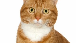 Allergies to Cats in Humans : Treating Allergies