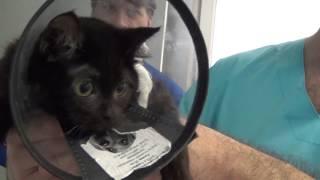 Рентген безногому котенку