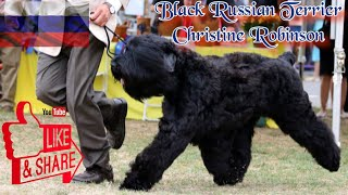 Episode 78: Black Russian Terriers   Christine Robinson from Black Beard  Black Russian Terriers