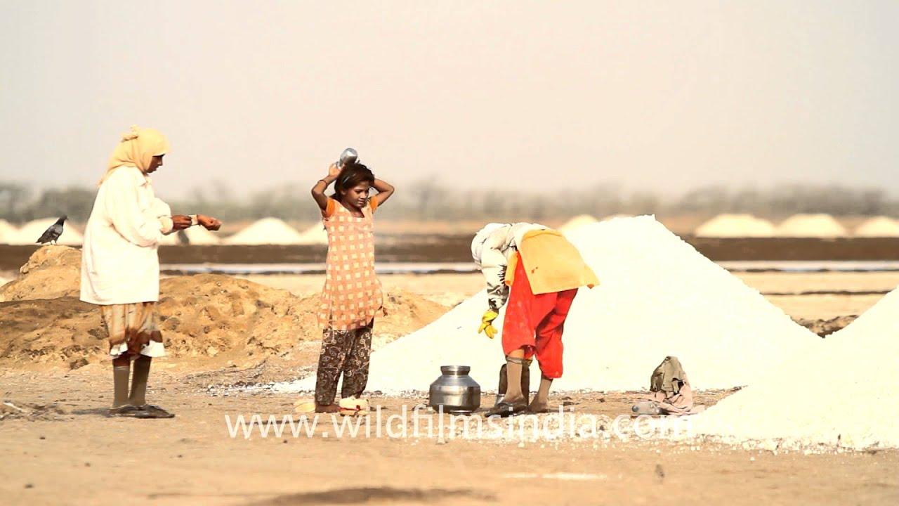 Rann of Kutch Salt Making Process