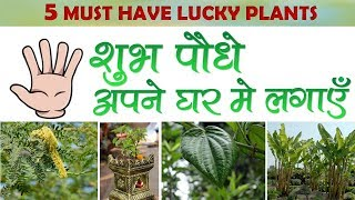 5  शुभ पौधे || Five lucky plants || Must have plants for home