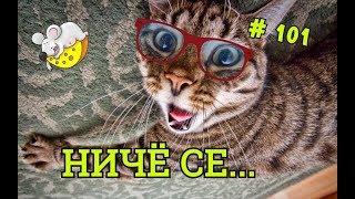 Приколы с котами, собаками, #ОМИКС февраль 2019 ч.1 / Fun with animals February 2019 part 1