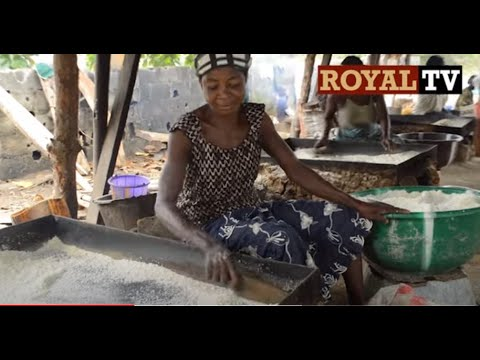 Garri: Cassava Production
