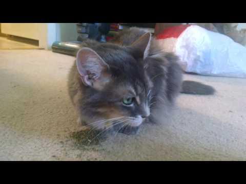 International Cat Day Awareness -- Adopt Love