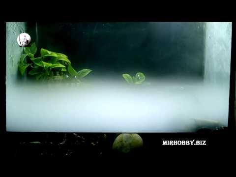 Смотреть генератор тумана (mist maker) в палюдариуме