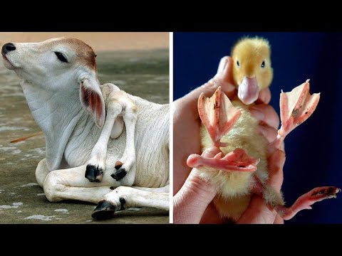 15 ANIMALS With The STRANGEST MUTATIONS