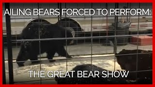 The Great Bear Show Forces Ailing Bears to Pe...