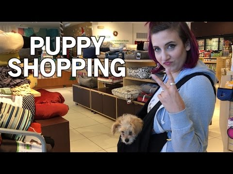 Shopping for My Puppy