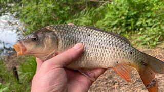 Онлайн Рыбалка на реке Сура