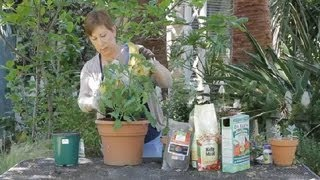 How to Amend Soil for Tomatoes : Garden Space