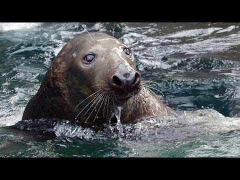 Wild Inside the National Zoo: Sea Mammal Smarts