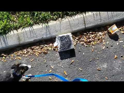Dog Training In Broward County,  Fl