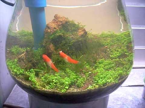 Fishbowl Update YouTube